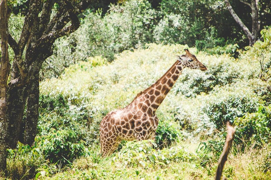 afrika-kenia-tansania-sansibar-safari-012