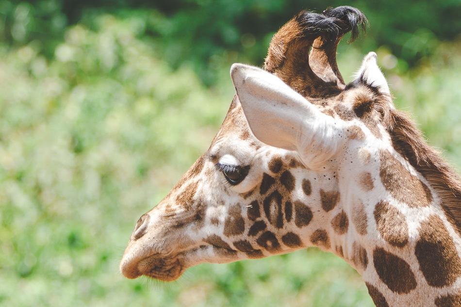 afrika-kenia-tansania-sansibar-safari-013
