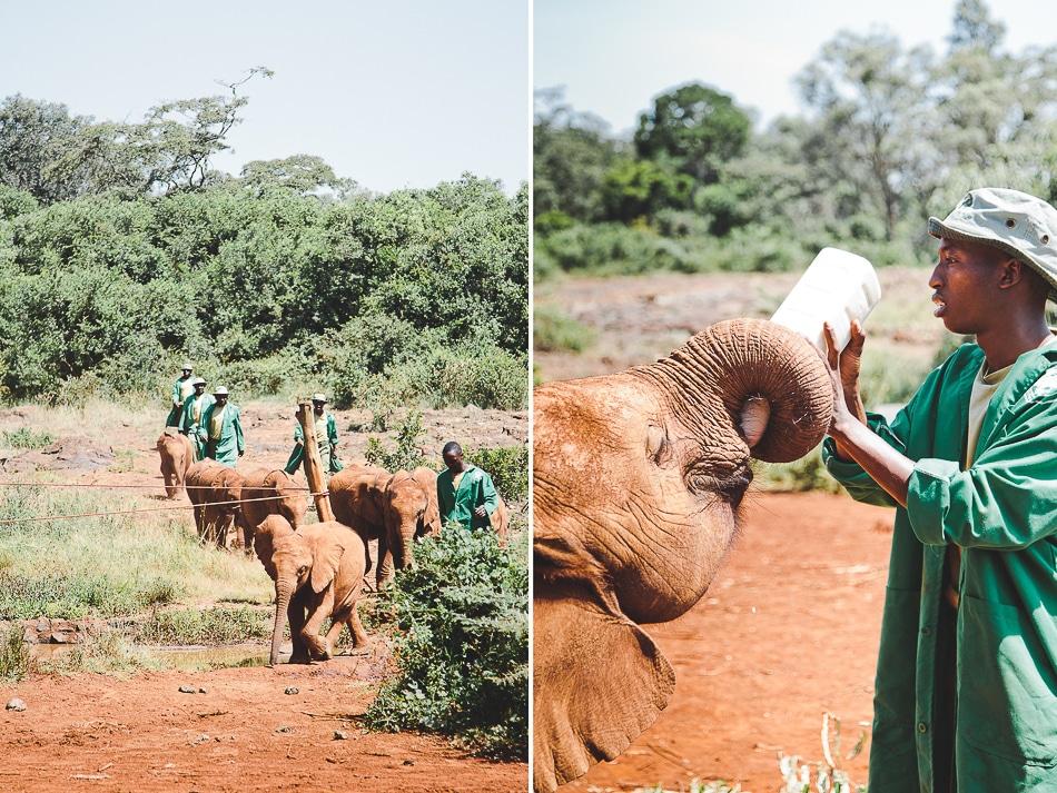 afrika-kenia-tansania-sansibar-safari-021