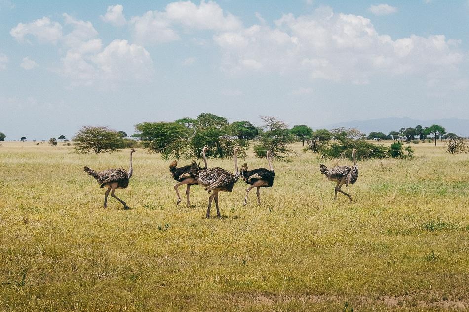 afrika-kenia-tansania-sansibar-safari-058