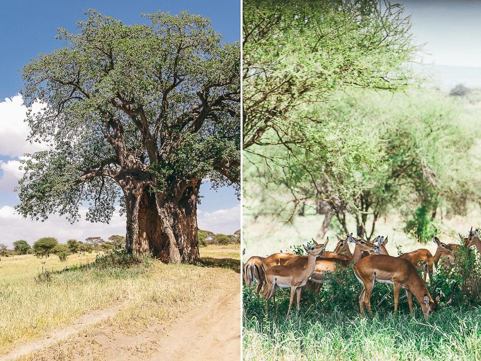 afrika-kenia-tansania-sansibar-safari-059