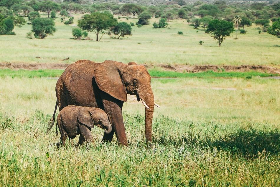 afrika-kenia-tansania-sansibar-safari-067