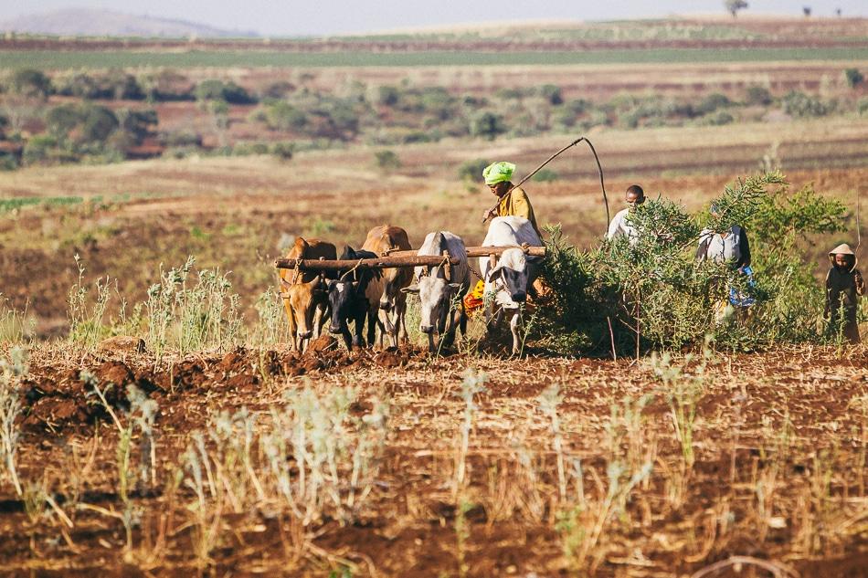 afrika-kenia-tansania-sansibar-safari-073