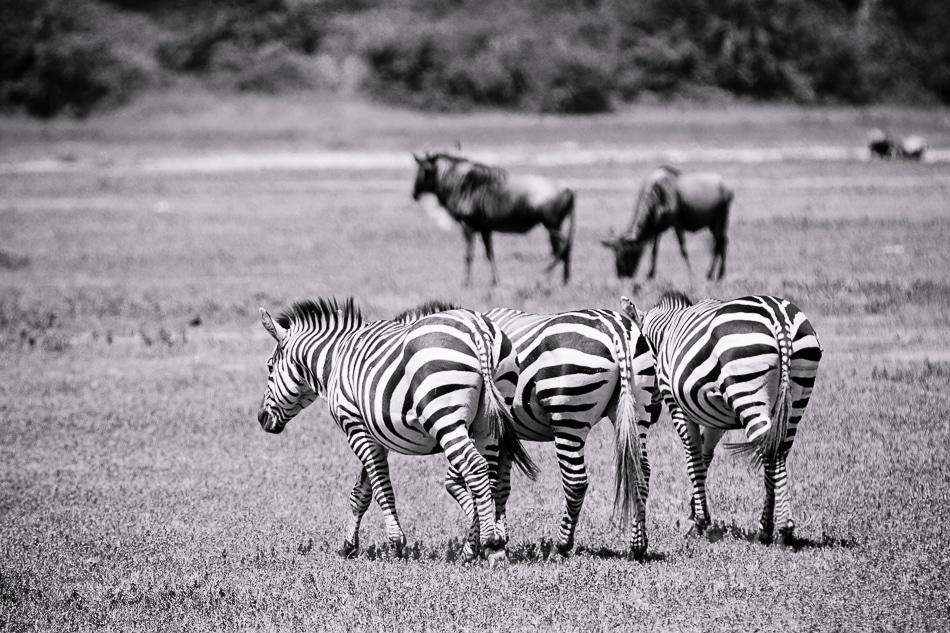 Kenia und Tansania reisen