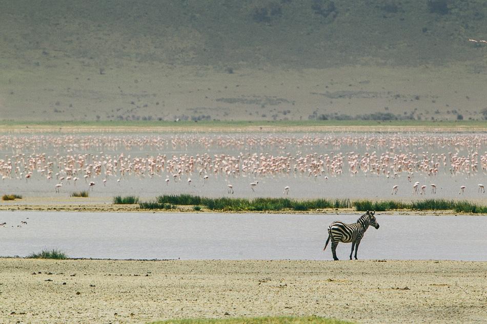 afrika-kenia-tansania-sansibar-safari-081