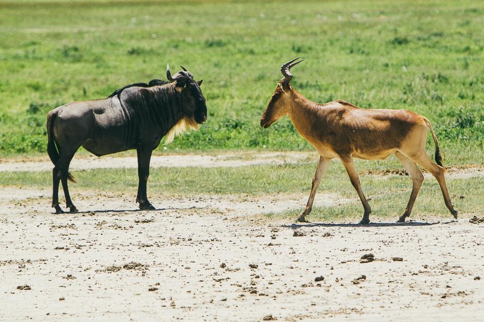 afrika-kenia-tansania-sansibar-safari-083