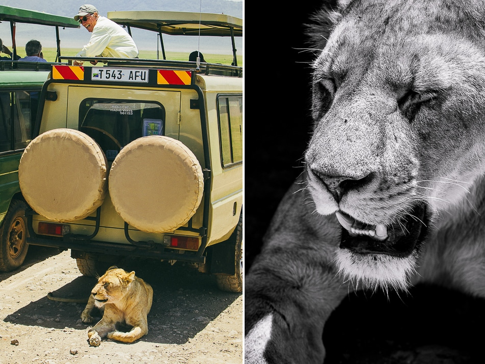afrika-kenia-tansania-sansibar-safari-086