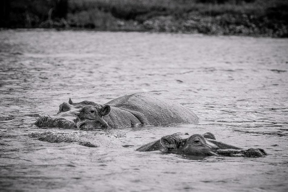 afrika-kenia-tansania-sansibar-safari-089