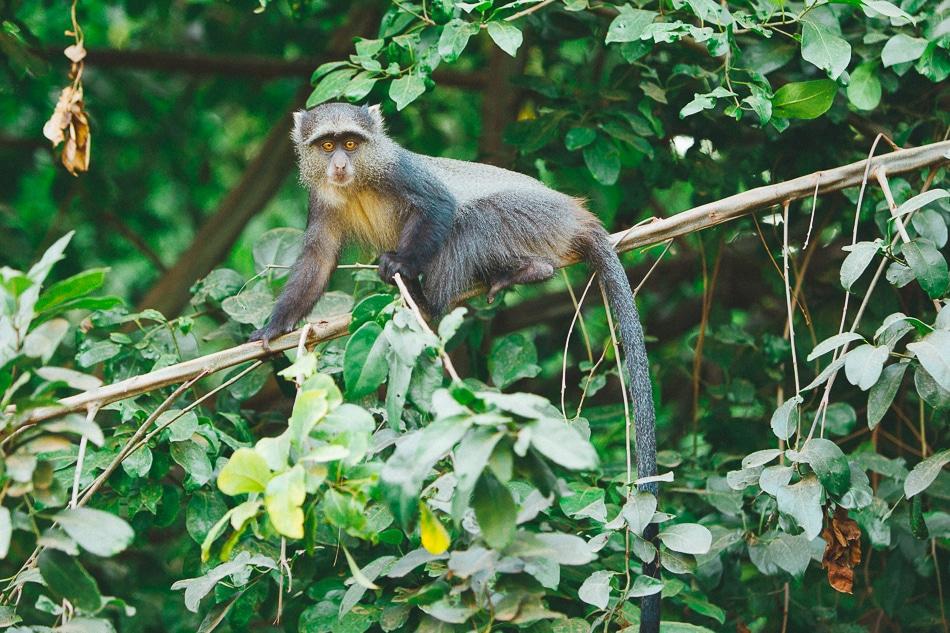 afrika-kenia-tansania-sansibar-safari-095