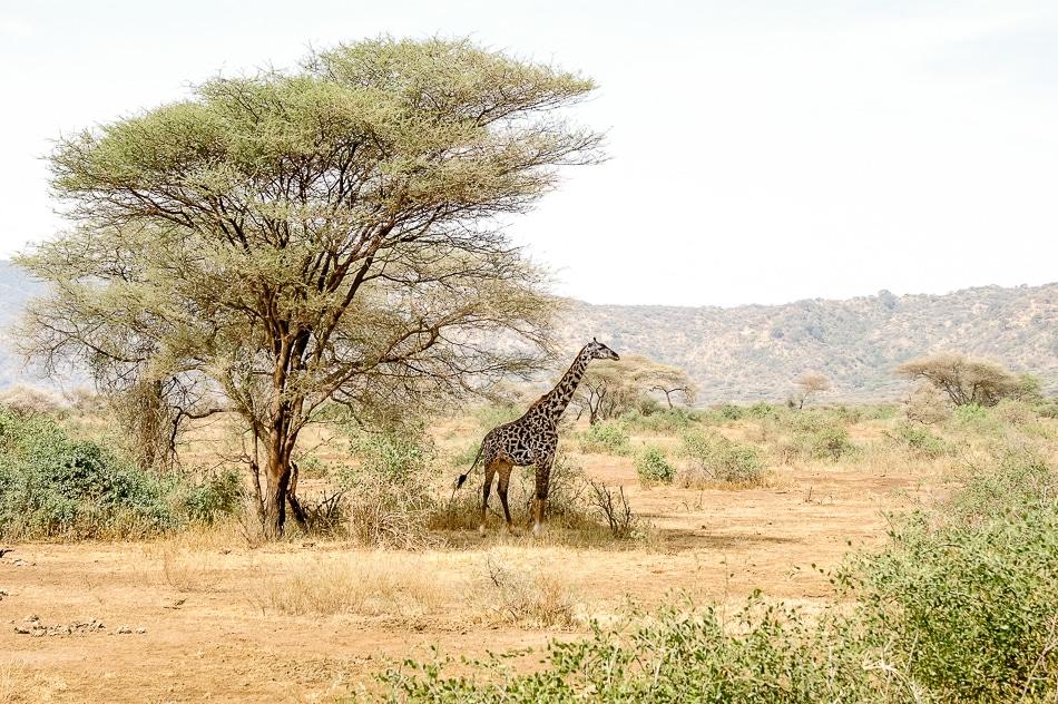 afrika-kenia-tansania-sansibar-safari-099