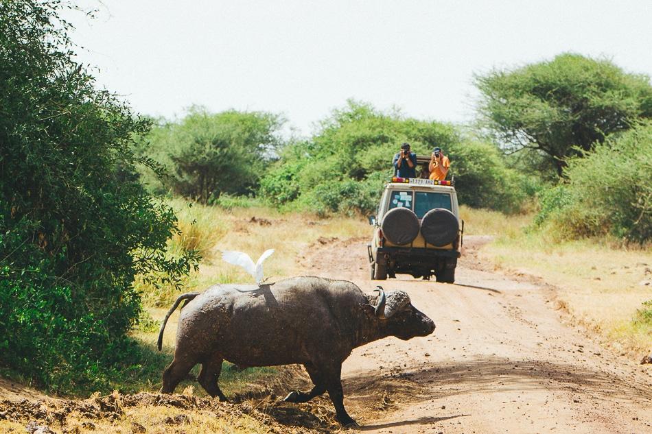 afrika-kenia-tansania-sansibar-safari-102